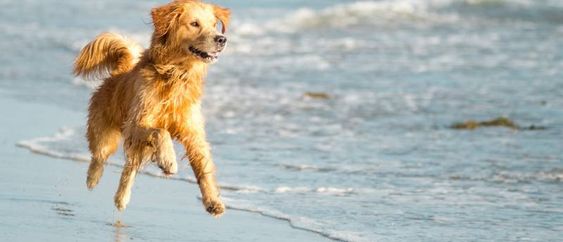 Torrevieja requests the Ministry of the Interior to authorize the popular consultation of the canine beach